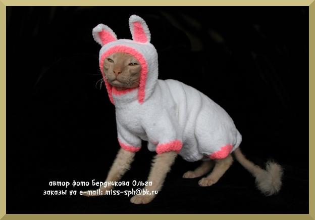 Одежда Для Сфинксов Купить